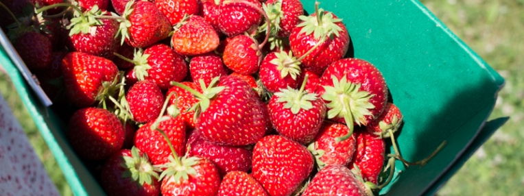 fraise 15 (1 sur 1)
