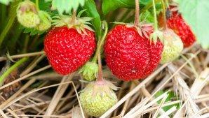 fruit-3269791__340
